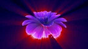 Ανοίγοντας τρισδιάστατη ζωτικότητα χρόνος-σφάλματος λουλουδιών πολύ άνθισης τη λαμπρή ανοικτό μπλε πορφυρή που απομονώνεται στη ν φιλμ μικρού μήκους