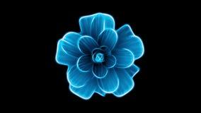 Ανοίγοντας τρισδιάστατη ζωτικότητα χρόνος-σφάλματος λουλουδιών πολύ άνθισης την μπλε που απομονώνεται στις νέες ποιοτικές όμορφες απόθεμα βίντεο