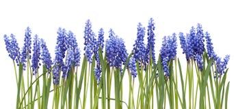 ανοίξεις λουλουδιών σ&up Στοκ φωτογραφία με δικαίωμα ελεύθερης χρήσης