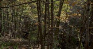 Ανοδική μετακίνηση από το κατώτατο σημείο του τελειώματος στην κορυφή στα φύλλα του δέντρου απόθεμα βίντεο