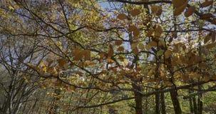 Ανοδική μετακίνηση με τους κλάδους και τα φύλλα των δέντρων κοντά σε μας φιλμ μικρού μήκους
