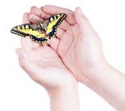 Ανοιγμένα χέρια του παιδιού που κρατούν μια ζωηρόχρωμη πεταλούδα Στοκ φωτογραφία με δικαίωμα ελεύθερης χρήσης