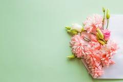 Ανοιγμένο σύνολο φακέλων των ρόδινων χρυσάνθεμων ανθών, λουλούδια στο μαλακό πράσινο υπόβαθρο Τοπ όψη Έννοια της αγάπης Ευτυχής Στοκ Φωτογραφία