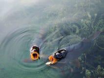 Ανοικτά στοματικά ψάρια Στοκ φωτογραφίες με δικαίωμα ελεύθερης χρήσης