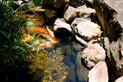 Ανοικτά ψάρια Mouthed στοκ εικόνες με δικαίωμα ελεύθερης χρήσης