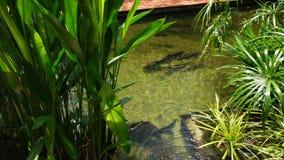 Ανοικτή δεξαμενή ψαριών στο ζωολογικό κήπο της Σιγκαπούρης στοκ φωτογραφίες με δικαίωμα ελεύθερης χρήσης