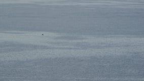 Ανοικτή ευρεία άποψη θάλασσας απόθεμα βίντεο