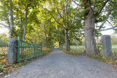 Ανοικτή πράσινη πύλη και μια πράσινη αλέα των δέντρων κατά τη διάρκεια του φθινοπώρου Στοκ φωτογραφία με δικαίωμα ελεύθερης χρήσης