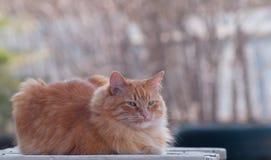 ανοικτή συνεδρίαση γατών &al στοκ εικόνες