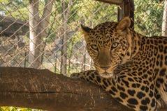 Ανοικτός ζωολογικός κήπος Khao prathap chang σε Ratchaburi Ταϊλάνδη Στοκ εικόνες με δικαίωμα ελεύθερης χρήσης