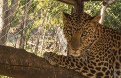 Ανοικτός ζωολογικός κήπος Khao prathap chang σε Ratchaburi Ταϊλάνδη Στοκ φωτογραφία με δικαίωμα ελεύθερης χρήσης