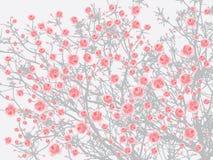 Ανοικτό γκρι υπόβαθρο ανθών κερασιών δέντρων sakura πλήρους άνθισης ρόδινο Στοκ φωτογραφία με δικαίωμα ελεύθερης χρήσης