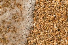 Ανοικτό θαλασσινό κοχύλι σε μια παραλία χαλικιών που καταβρέχεται από τις κυματωγές μιας θάλασσας Στοκ Εικόνες