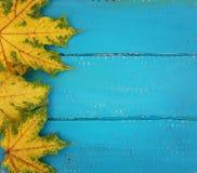 Ανοικτό μπλε ξύλινα υπόβαθρο και φύλλα σφενδάμου στοκ εικόνες με δικαίωμα ελεύθερης χρήσης