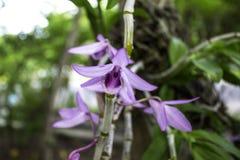 Ανοικτό μωβ λουλούδια στον κήπο πίσω από bokeh λίγο Στοκ εικόνα με δικαίωμα ελεύθερης χρήσης