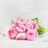 Ανοικτό ροζ λουλούδια ranunkulus άνοιξη στο μαρμάρινο υπόβαθρο, τετραγωνική συγκομιδή Στοκ Φωτογραφία