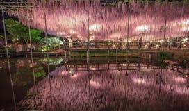 Ανοικτό ροζ trellis wisteria τη νύχτα Στοκ Φωτογραφίες