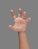 Ανοικτό χέρι που εμφανίζει και πέντε δάχτυλα στοκ φωτογραφία με δικαίωμα ελεύθερης χρήσης