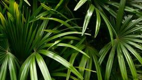 Ανοιχτά juicy εξωτικά τροπικά πράσινα στο δασικό ισημερινό κλίμα ζουγκλών Υπόβαθρο με το ασυνήθιστο φύλλωμα εγκαταστάσεων απόθεμα βίντεο