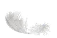 ανοιχτό λευκό φτερών Στοκ φωτογραφία με δικαίωμα ελεύθερης χρήσης