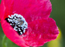 ανοιχτό ροζ λουλουδιών Στοκ φωτογραφίες με δικαίωμα ελεύθερης χρήσης