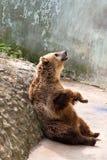 Αντέξτε για τα τρόφιμα στο ζωολογικό κήπο Στοκ εικόνα με δικαίωμα ελεύθερης χρήσης