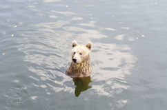 Αντέξτε κάθεται σε έναν ποταμό Στοκ Φωτογραφίες