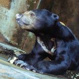 Αντέξτε σε ένα κλουβί στο ζωολογικό κήπο Στοκ εικόνες με δικαίωμα ελεύθερης χρήσης