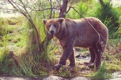 Αντέξτε στην Αλάσκα Στοκ Εικόνες