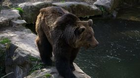 Αντέξτε στο ζωολογικό κήπο στο Ίνσμπρουκ στοκ εικόνα