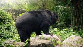 Αντέξτε στο ζωολογικό κήπο που κινείται γύρω απόθεμα βίντεο