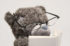 αντέξτε την ανάγνωση βιβλίων teddy Στοκ φωτογραφίες με δικαίωμα ελεύθερης χρήσης
