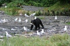 αντέξτε τη μαύρη αλιεία Στοκ Εικόνες