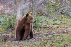 αντέξτε τις άγρια περιοχές Στοκ φωτογραφία με δικαίωμα ελεύθερης χρήσης