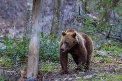αντέξτε τις άγρια περιοχές Στοκ Εικόνες