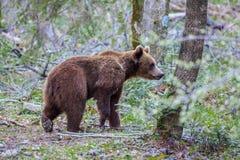 αντέξτε τις άγρια περιοχές Στοκ Εικόνα
