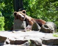 αντέξτε τον καφετή ζωολογικό κήπο πόλεων Στοκ Εικόνες