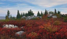 Αντέξτε τους βράχους μετακινείται τη δυτική Βιρτζίνια γρασιδιών Στοκ Εικόνες