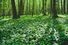 Αντέξτε το δάσος πράσων Στοκ φωτογραφία με δικαίωμα ελεύθερης χρήσης