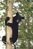 αντέξτε το μαύρο δέντρο Στοκ Εικόνες