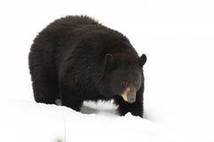 αντέξτε το μαύρο χιόνι Στοκ εικόνες με δικαίωμα ελεύθερης χρήσης