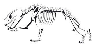 Αντέξτε το σχέδιο σκελετών τρέχει στοκ φωτογραφία με δικαίωμα ελεύθερης χρήσης