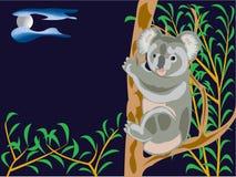 αντέξτε το koala Στοκ Εικόνες