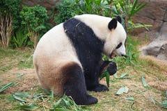 αντέξτε το panda Στοκ φωτογραφία με δικαίωμα ελεύθερης χρήσης