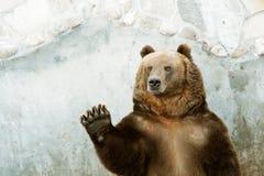 αντέξτε όντας Βερολίνο καφετί έχει καλυμμένο το φωτογραφία ζωολογικό κήπο Στοκ φωτογραφίες με δικαίωμα ελεύθερης χρήσης