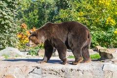 αντέξτε όντας Βερολίνο καφετί έχει καλυμμένο το φωτογραφία ζωολογικό κήπο Στοκ εικόνες με δικαίωμα ελεύθερης χρήσης