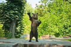 αντέξτε όντας Βερολίνο καφετί έχει καλυμμένο το φωτογραφία ζωολογικό κήπο Στοκ Εικόνες