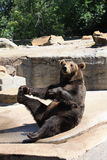 αντέξτε όντας Βερολίνο καφετί έχει καλυμμένο το φωτογραφία ζωολογικό κήπο Στοκ εικόνα με δικαίωμα ελεύθερης χρήσης
