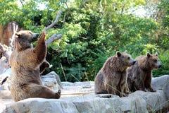 αντέξτε όντας Βερολίνο καφετί έχει καλυμμένο το φωτογραφία ζωολογικό κήπο Στοκ Εικόνα