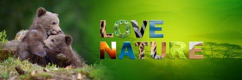 Αντέξτε cub με τη φύση αγάπης κειμένων Στοκ φωτογραφία με δικαίωμα ελεύθερης χρήσης